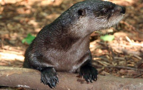 Do onto otters as you would have them do onto you